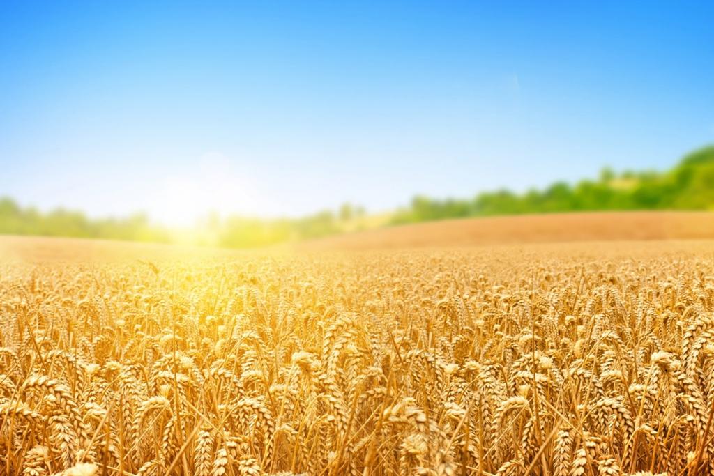Сайт-каталог для компании «Русская усадьба», занимающейся продажей товаров сельхоз назначения